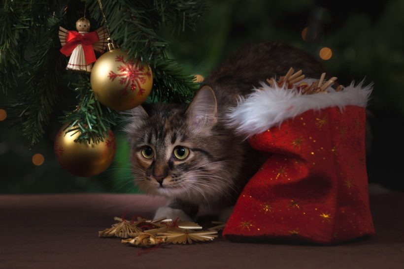 Why You Should Never Give a Pet as a Holiday Gift